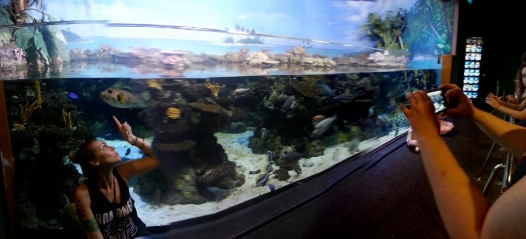 photocall aquarium normcoregirl