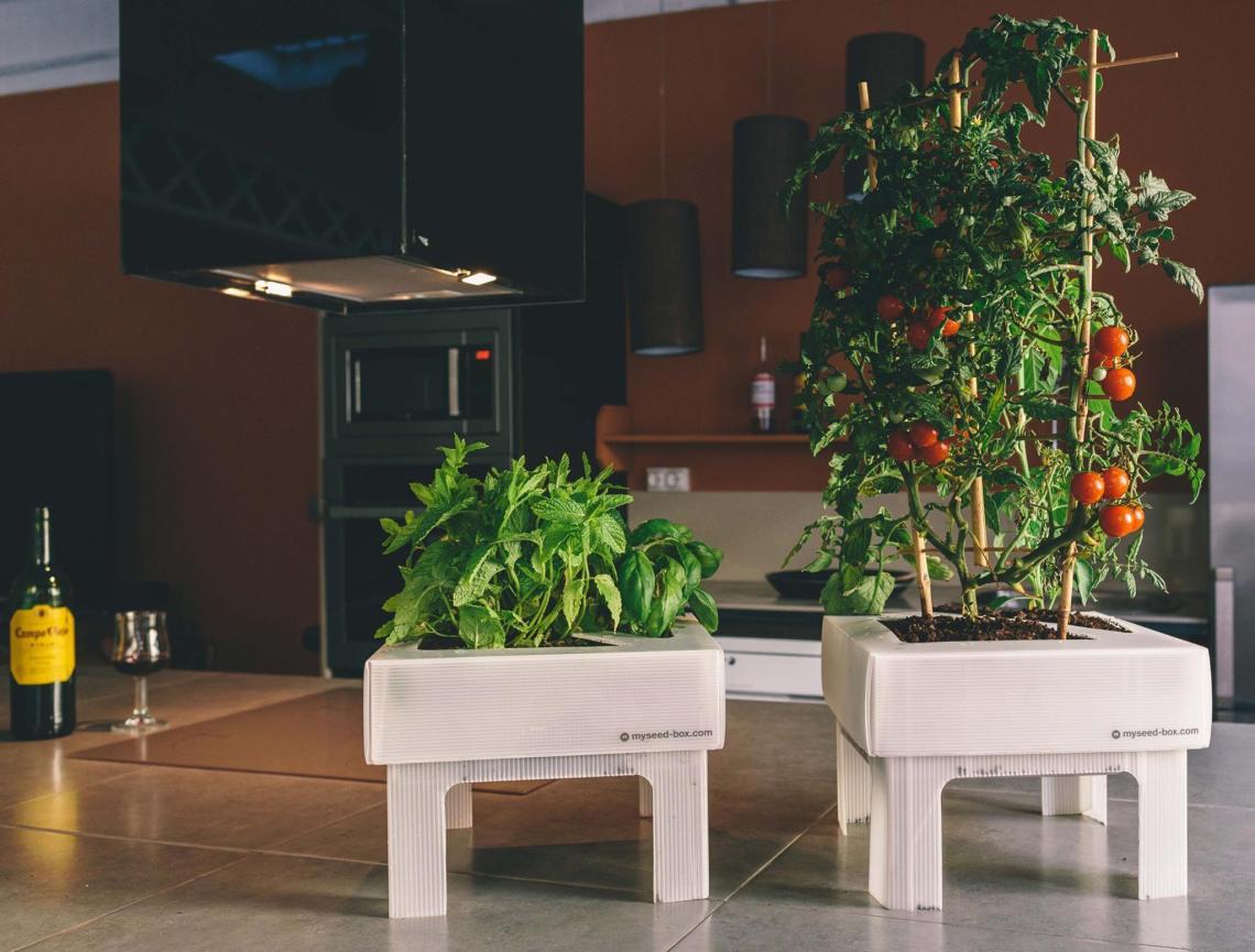 inderum normcoregirl seed box